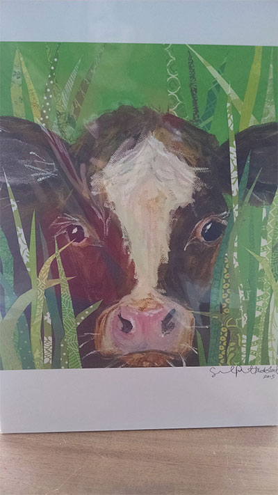 NS cow pic